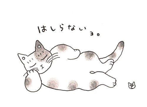 師走の猫 1